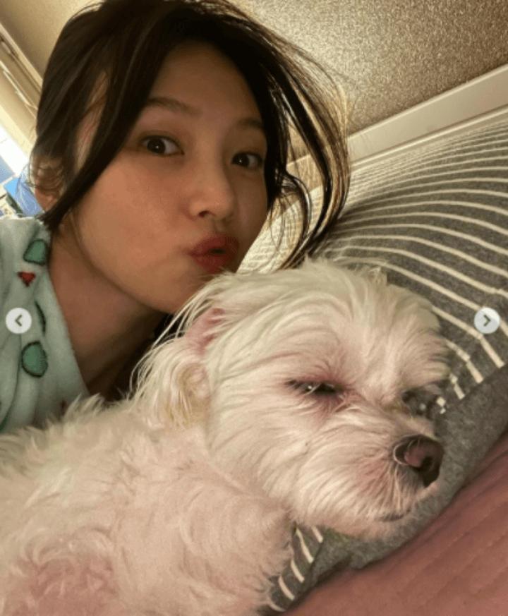 조이-잠옷-반려견-강아지
