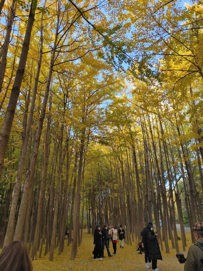 서울 단풍 명소로 추천하는 서울 숲, 다양함과 규모가 매력적