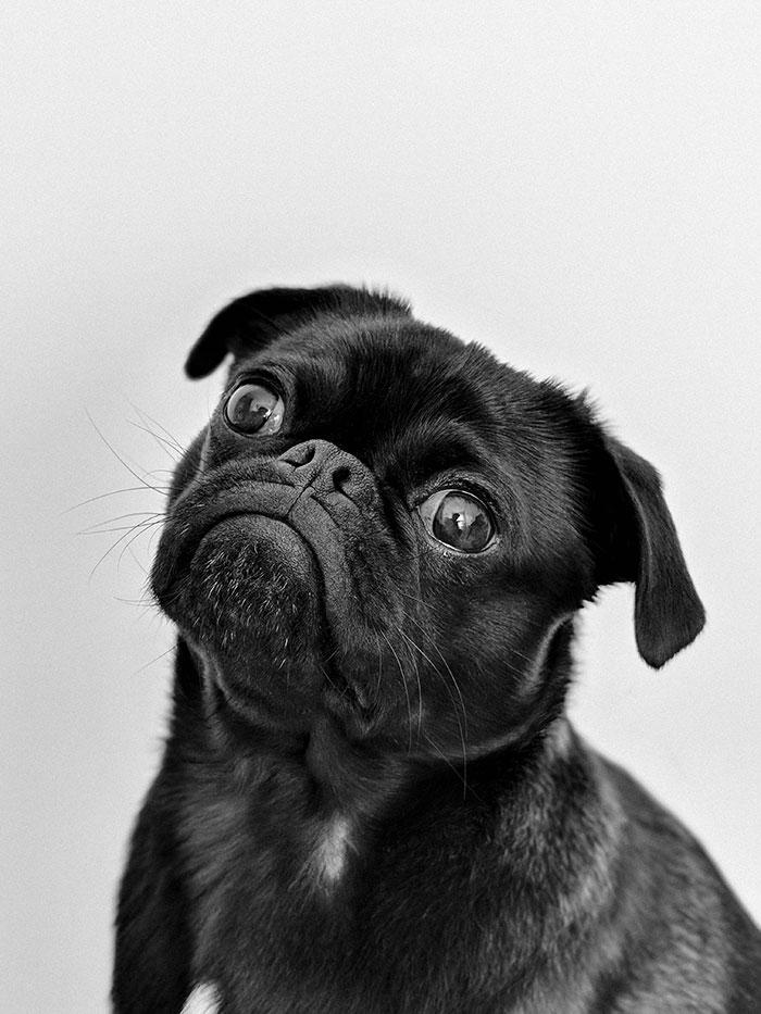 생각하는 검은색 강아지