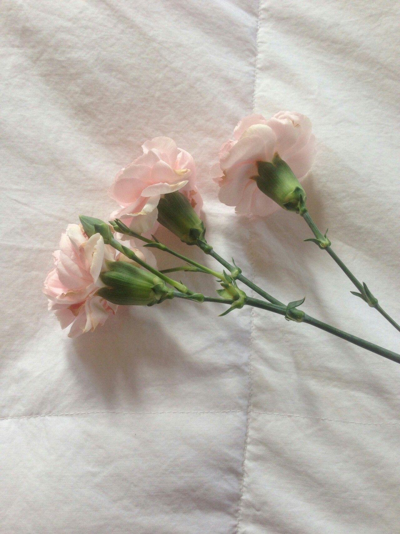 러블리한 파스텔톤 핑크스타일